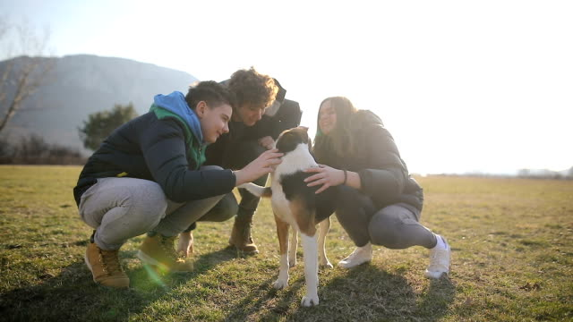 small group of teenagers play with stray dog in field.brothers and sister in the back light - pampered dog stock videos and b-roll footage