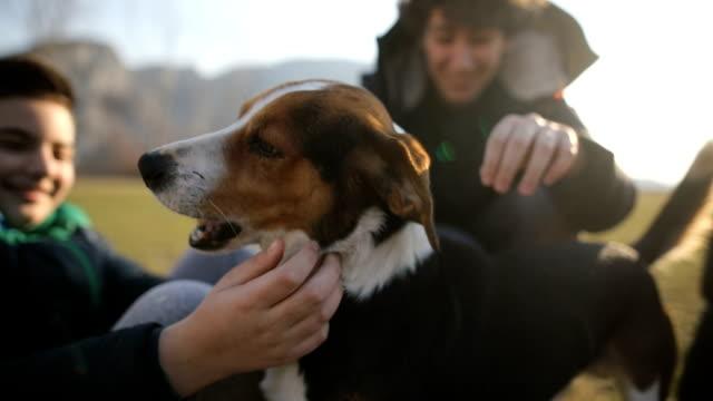 vídeos de stock, filmes e b-roll de o grupo pequeno de adolescentes joga com o cão disperso no campo. irmãos e irmã na luz traseira - animal family