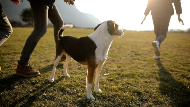 small group of teenagers play with stray dog in field.brothers and sister in the back light - pet owner stock videos & royalty-free footage