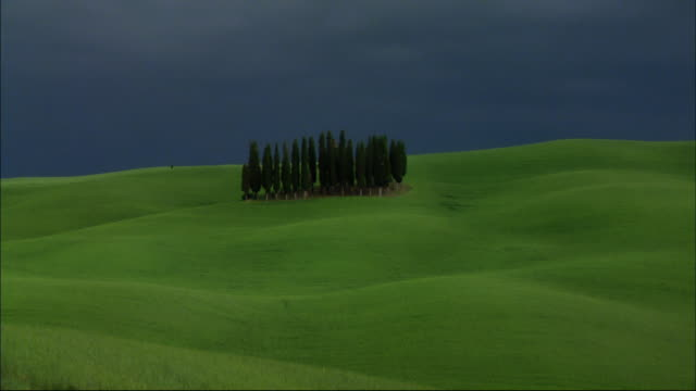 a small grove of trees grows on green rolling hills. - rolling landscape stock videos & royalty-free footage