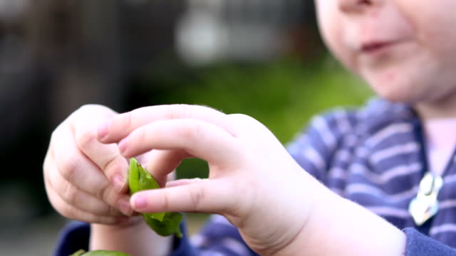 Small hands and green peas