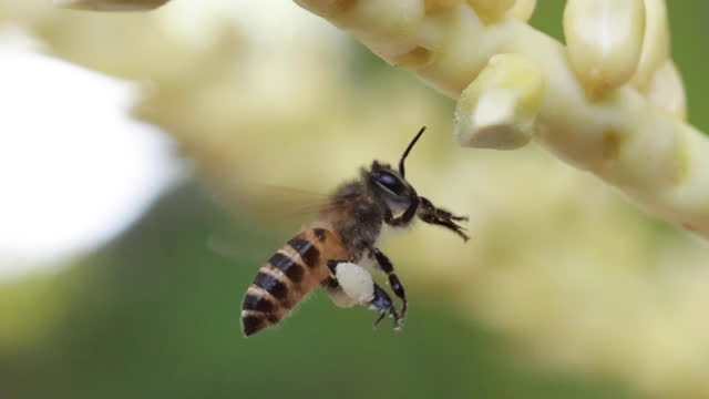 small hard working bee gathering pollen during sunny summer day - crop stock videos & royalty-free footage