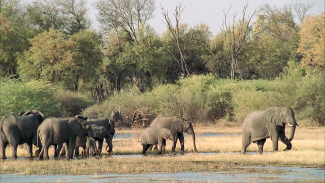 WS Small herd of african elephants standing at edge of river / Unspecified