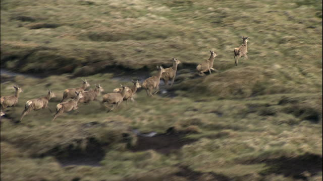 a small herd of deer run across a barren hilly landscape. - deer stock videos & royalty-free footage