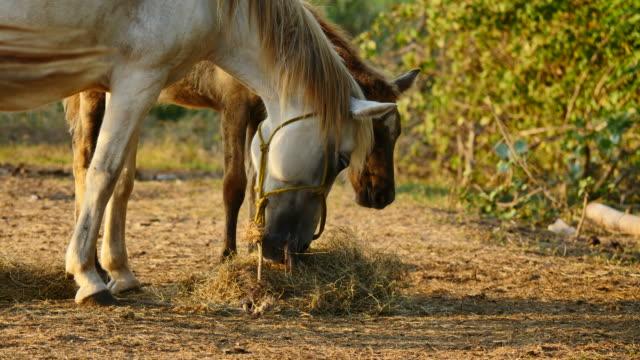 Small herd of horses feeding.