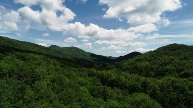 Small Hills Covered With Green Forest From Drone Point of View
