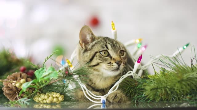 Kleines Kätzchen umgeben von Weihnachtsschmuck