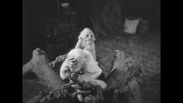 1925 small monkeys eerily staring and acting strange on a branch - head in hands stock videos & royalty-free footage