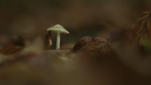 Cogumelo pequeno no chão da floresta