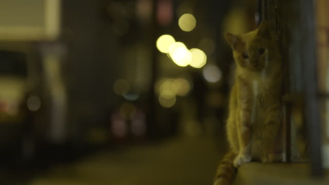 Small orange kitten sits on ledge