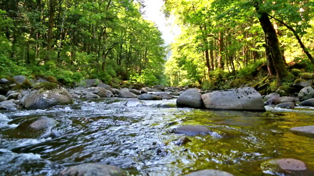small oregon stream - small stock videos & royalty-free footage