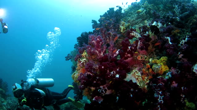 small pinnacle with rich soft coral undersea, raja ampat - soft coral stock videos & royalty-free footage