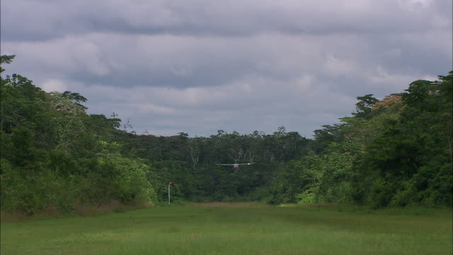 ws small plane landing on grassy strip in amazon rainforest / cuzco region, peru  - landen stock-videos und b-roll-filmmaterial