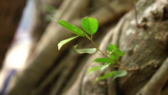 liten växt på ett stort träd i trä - jätte uppdiktad figur bildbanksvideor och videomaterial från bakom kulisserna