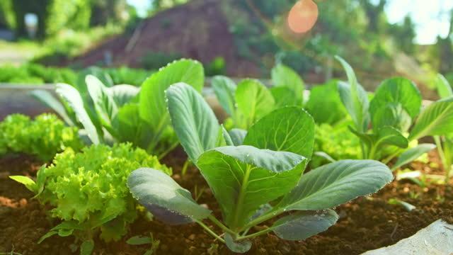 vídeos y material grabado en eventos de stock de slo mo ds pequeñas plantas tomando el sol en un jardín - enfoque en primer plano
