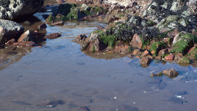 small pool of water on a scottish beach - general view stock videos & royalty-free footage