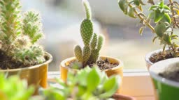 Small potted succulent plants close up