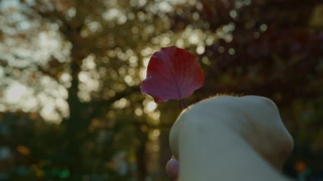 vídeos y material grabado en eventos de stock de pov rojas pequeñas de otoño con hojas jugando con el sol - mancha solar