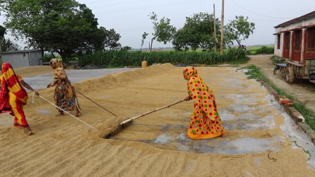 vídeos de stock, filmes e b-roll de small rice mill in dhaka woman workers turn over paddy for drying in the sun - condição