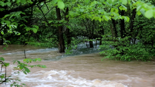 small river after rain - national landmark stock videos & royalty-free footage