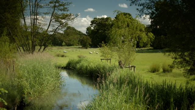 small river curving through green pastureland - grazing stock videos & royalty-free footage