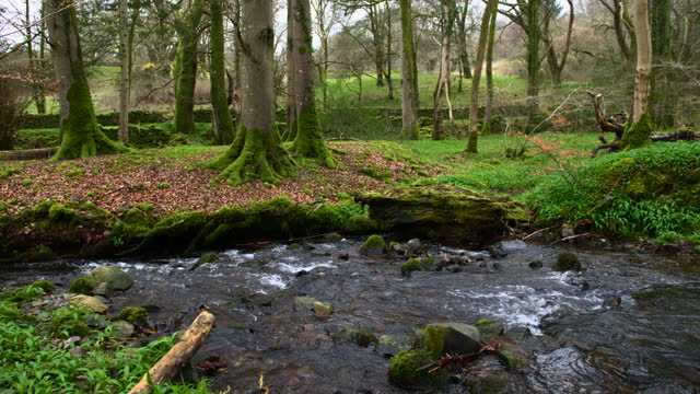 small river flowing in rural woodland - establishing shot stock videos & royalty-free footage