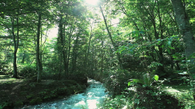 ms small river flowing through beautiful forest / furano, hokkaido, japan - lush video stock e b–roll