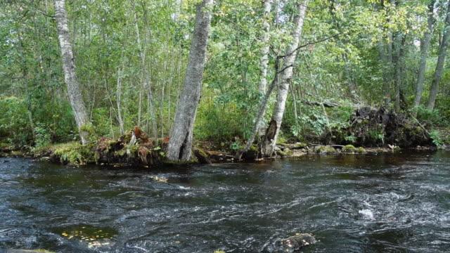 stockvideo's en b-roll-footage met riviertje - schuifregelaar schot - berk