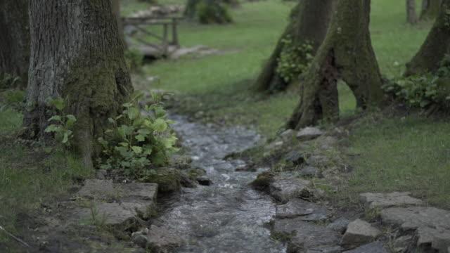 vídeos de stock e filmes b-roll de small rocky stream in a natural park. - pequeno