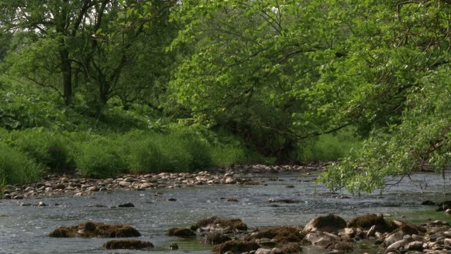 Small Scottish river on a bright summer afternoon