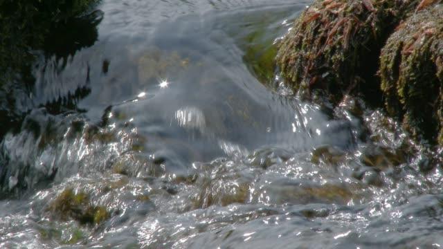 明るい夏の午後に小さなスコットランドの川 - johnfscott点の映像素材/bロール