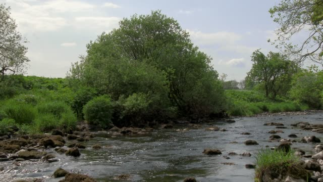 small scottish river on a bright summer afternoon - dumfries and galloway stock videos & royalty-free footage