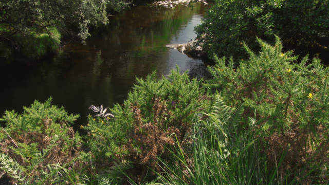 small scottish river on a summer afternoon - johnfscott stock videos & royalty-free footage