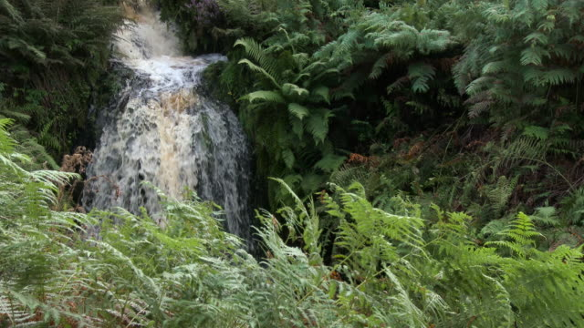 small scottish waterfall in rural dumfries and galloway - johnfscott stock videos & royalty-free footage