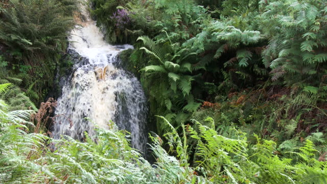 small scottish waterfall in rural dumfries and galloway - derrygown linn stock videos & royalty-free footage