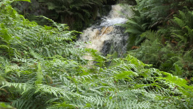 Small Scottish waterfall in rural Dumfries and Galloway