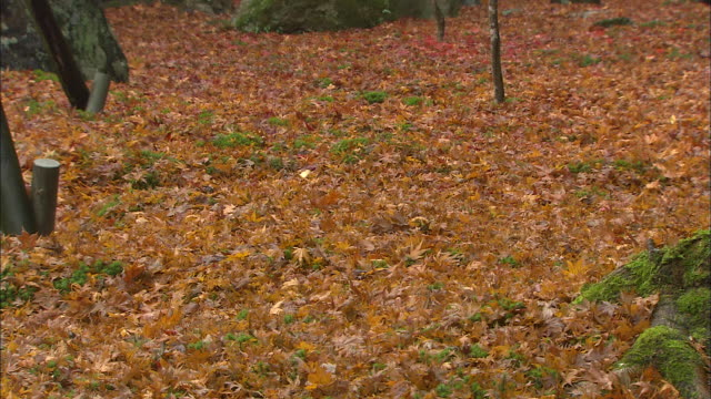 Small shrubs and trees grow among fallen autumn leaves.