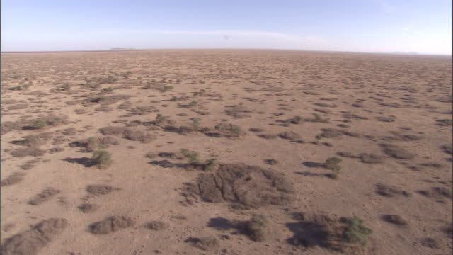 Small shrubs in a dry savannah landscape. Available in HD.