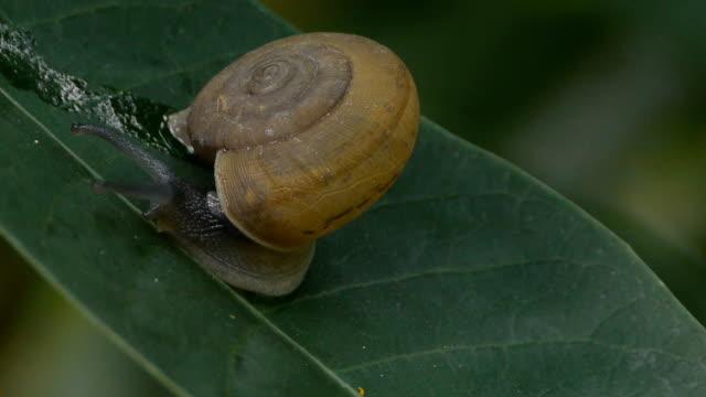 vídeos de stock, filmes e b-roll de pequeno caracol retorno em u - gastrópode