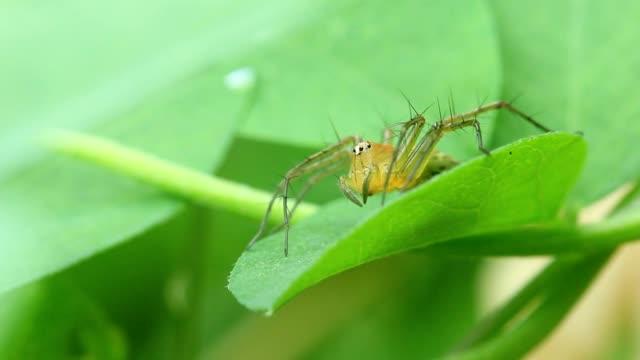 自然の中で緑の葉に小さなクモ。 - 動物の脚点の映像素材/bロール