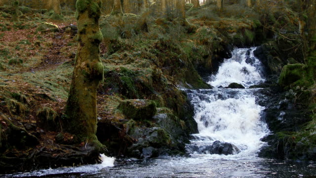 small stream and waterfall in rural dumfries and galloway, scotland - johnfscott stock videos and b-roll footage