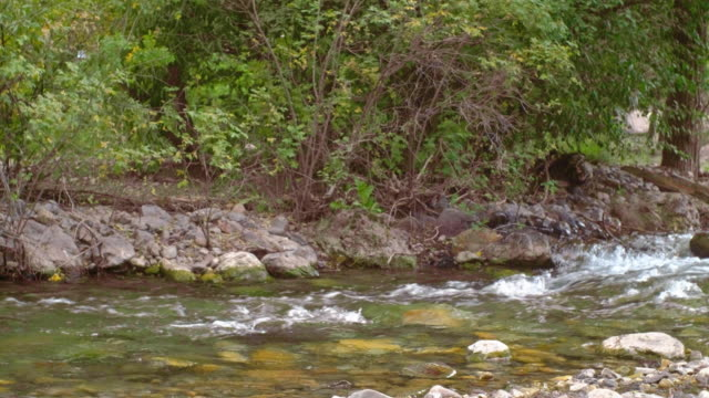 small stream in a wilderness area - wilderness area stock videos & royalty-free footage