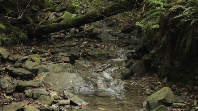 mh ld small stream in forest / ireland - 10 seconds or greater stock videos & royalty-free footage