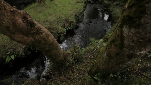 ws tu small stream in forest / ireland - northern ireland stock videos & royalty-free footage