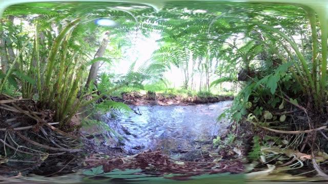 vídeos de stock e filmes b-roll de 360vr, small stream in natural landscape, floodplain forest, biodiversity, vr360 - panorama equiretangular