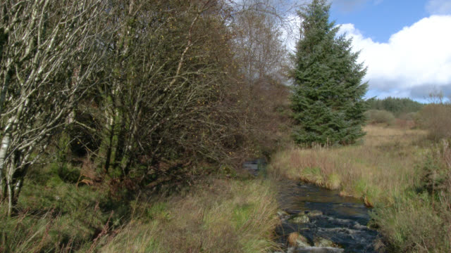 small stream in rural scotland - johnfscott stock videos & royalty-free footage