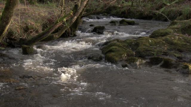 Kleine Bach durch den Wald im ländlichen Dumfries und Galloway Südwesten Schottlands