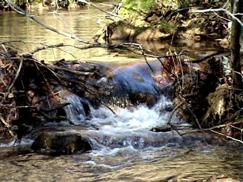 Petit stream