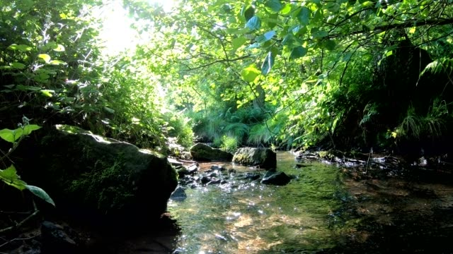 small stream with alluvial forest and wetlands, biodiversity - 川点の映像素材/bロール