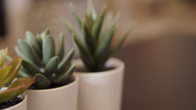 small three cactus in the living room - cactus texture stock videos & royalty-free footage